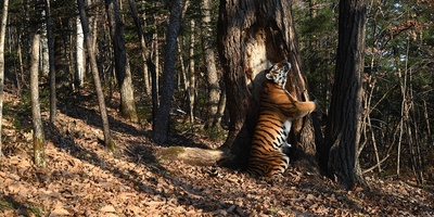Земля Леопарда, или Феномен Человека